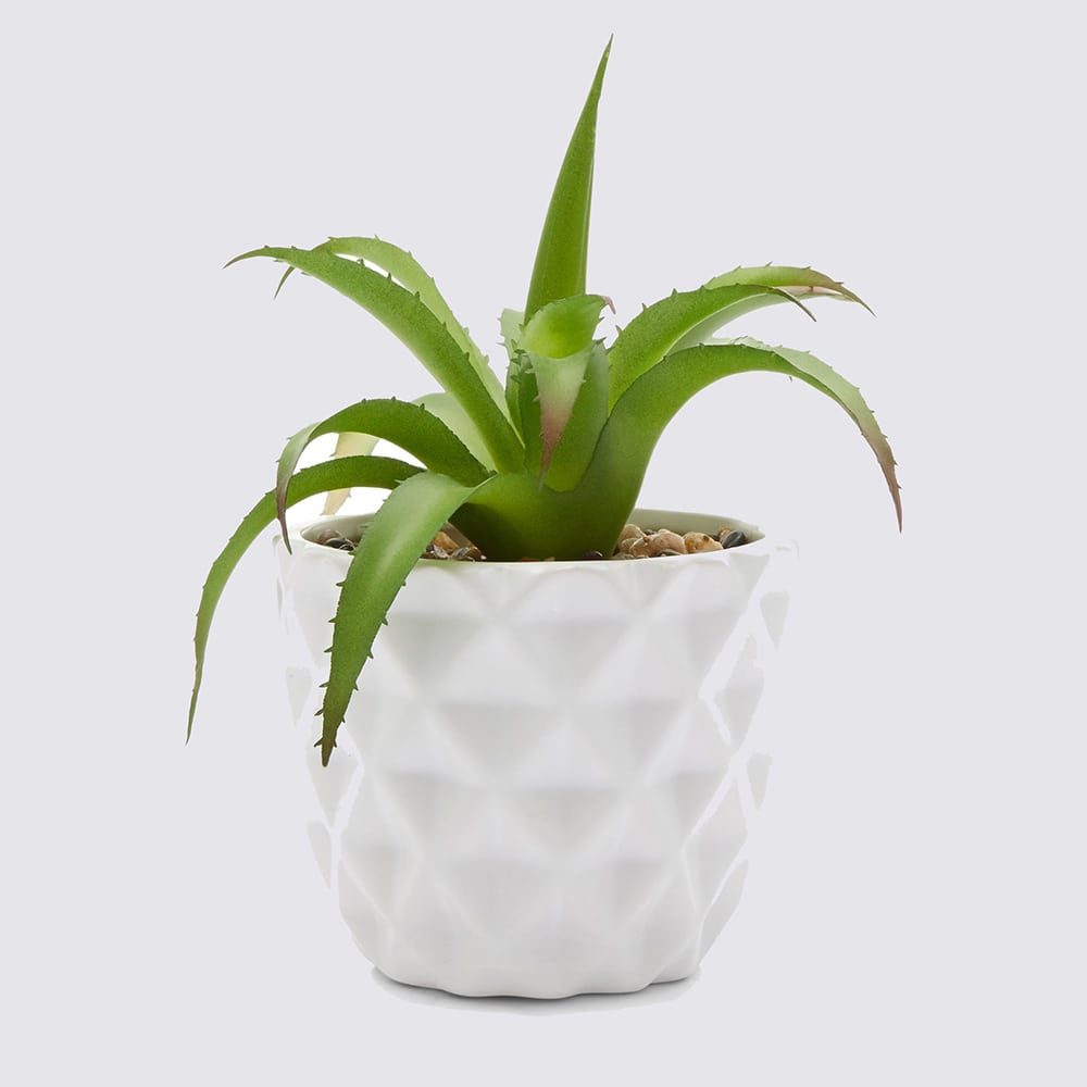 White Artificial Cactus Plant Pot £5.99 New Look